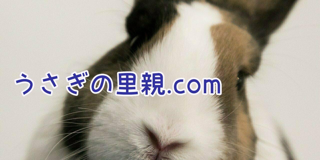 うさぎの里親.com